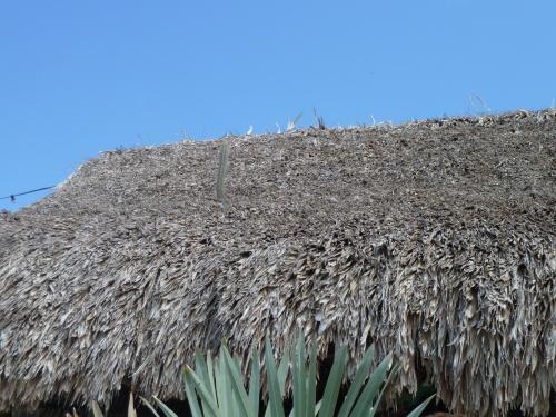 Random roof cactus